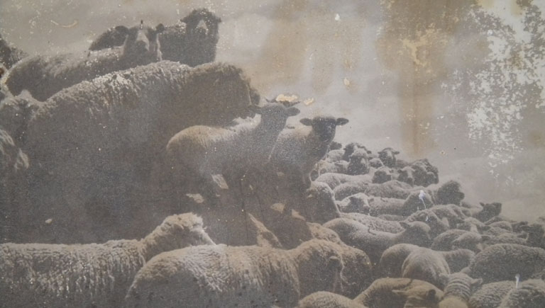 Belden Photo