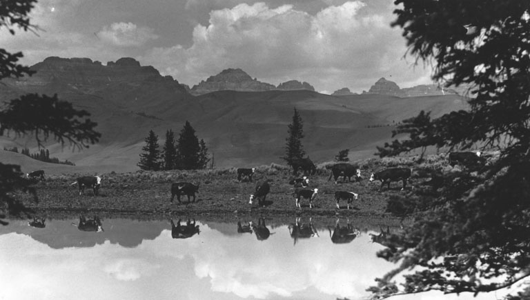 belden-slider6