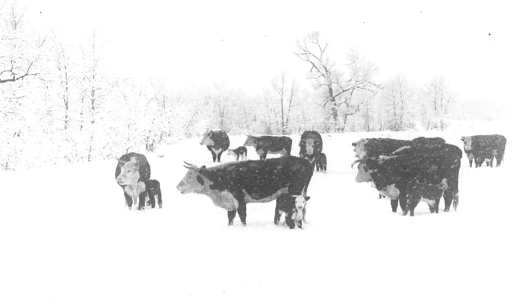 belden-slider7